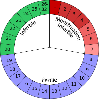 most fertile time of cycle